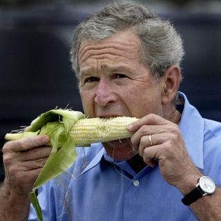 Bush-eating-corn